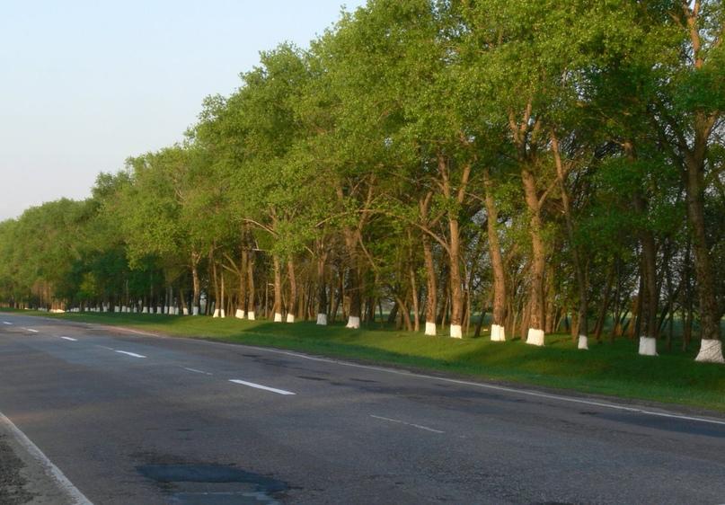 День любви к деревьям, изображение №1