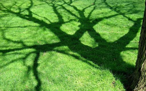День любви к деревьям, изображение №5