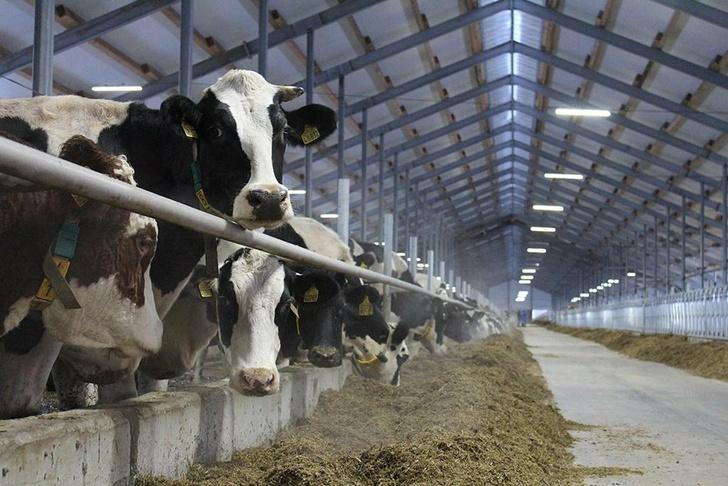 Крупнейшие проекты в молочной отрасли. Обзор строительства, изображение №13
