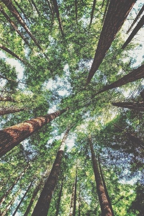 День любви к деревьям, изображение №9